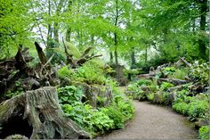Ten years ago, the Prince of Wales asked garden designers Isabel & Julian Bannerman to create the Stumpery. In a grassy glade, hostas, hellebores & native ferns - some of the Prince's favourite plants - were grown among interlocking tree roots. In 2002, the chance came to extend the Stumpery. The new Stumpery was formed using 200 tons of topsoil to shape raised banks around a further 250 tree stumps, creating conditions very like those that woodland plants favour in the wild.