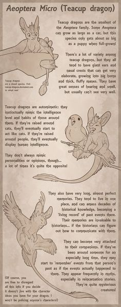 Teacup Dragon Species Sheet by Aeoptera.deviantart.com on @DeviantArt