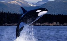 Whale Wallpapers - Full HD wallpaper search