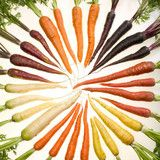 All-Heirloom Rainbow of Carrots