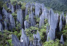 Mulu National Park, Miri, Sarawak, de zogenoemde Pinnacles, http://www.naturescanner.nl/azie/maleisie/sarawak-maleisie