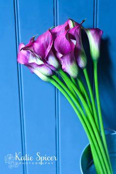 Fine art flower photography print by Katie Spicer. Pink Zantedeschia floral art.