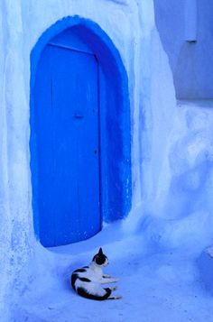 Morocco, Rif Region, Chefchaouen, the blue medina, cat in front of a door