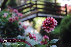 Flower Garden Captured by: Aaya.fadel, Email: ayagraphy.fadel@gmail.com #photography #landscapephotography #photoshoot #photographyislifee #stunning #turkey #travel #moment #love #life #beautiful #digital #nikon #naturelovers #instagram #instafollow #vacation #perfect #Trabzon #uzungol #flower #green #Nature #oxygen #season #spring follow me on Instagram: (Aaya.fadel)