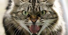 :'( SNIFF :'( SNIFF AU SECOUR DES FOUS :'( SNIFF :'( SNIFF  :'( sniff :'( sniff BOURREAU :'( ASSASSIN :'( SAUVAGE :'( CONNARD :'( POURRI :'( DEBILE :'( sniff :'( sniff  AMORE  SI TU EST DACCORD PARTAGE MERCI  :'( SNIFF :'( SNIFF :'( SNIFF  Les chats en danger : Daesh leur déclare la guerre !  Daesh contre les chats  Le groupe Etat Islamique (EI) aurait introduit il y a peu une fatwa interdisant l'élevage de chats sur l'ensemble de son territoire…