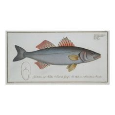Vintage Illustration of a Umber Fish (1785) Poster - vintage gifts retro ideas cyo