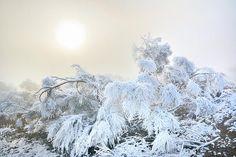 ice,fog,misty,sunrise,sunset,, plants, landscapes,colorful, horizontal, outdoors, nature, landscape, exterior, europe, photography, fine art,olives,tree,rural
