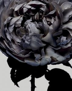 | LANDSCAPING | FLORAL | Photo Credit:  Nick Knight - beautiful #floral