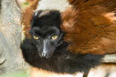 Lemur, Mammals, Bird, Garden, Garten, Birds, Lawn And Garden, Gardens, Gardening