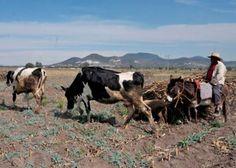 México y Francia impulsan cooperación en sector agrícola - See more at: http://www.oem.com.mx/laprensa/notas/n4144578.htm#sthash.5RQGpGtp.dpuf