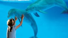 In what ways do aquariums actually help oceans?