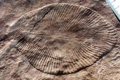The first complex life on Earth got eaten to extinction. - New Scientist