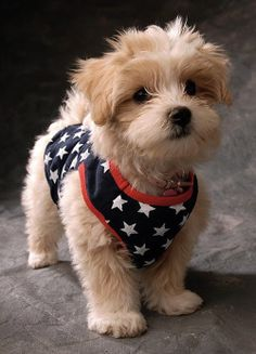 102 Best Puppies Images Cute Dogs Cute Puppies Fluffy Animals