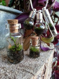 Live Moss Terrarium Necklace by TheLittleBrokenWing on Etsy, $18.99