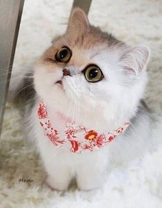 What shredded drapes, Innocent looking white kitten, cute cats, sweet kittens, Cute Kittens, Kittens And Puppies, Cats And Kittens, Animals And Pets, Baby Animals, Funny Animals, Cute Animals, Pretty Cats, Beautiful Cats