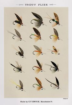 Vintage Fly Fishing Print Trout Flies Print by plaindealing