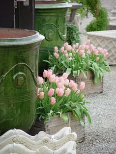 French Anduze urns with boxed-tulips