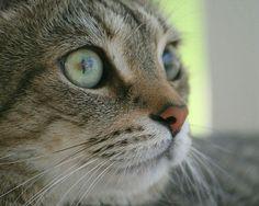 My cat Bubba...