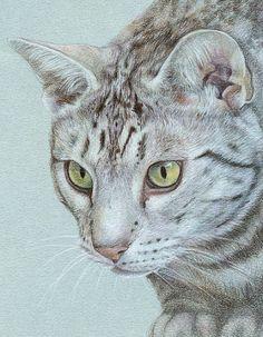Coloured pencil cat portrait on Canson Mi-Teintes paper by Katrina Ann.