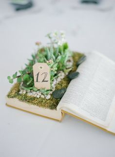Unique table number idea using succulents and a carved-out book. | http://emmalinebride.com/modern/succulents-in-weddings/