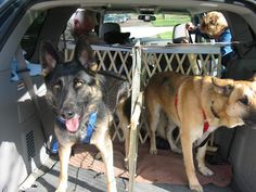 van set up for dogs - Google Search
