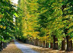 Foliage d'autunno al Parco della Quassa
