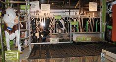 Das Kuh Mobil  von innen: Infotafeln geben Auskunft über Fütterung und Haltung