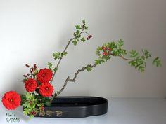 Ikebana  By Kim Ta