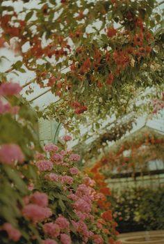 Royal Greenhouses in Laeken. | by Petrana Sekula