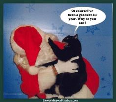 Cat Bites Santa
