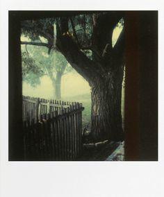 Andrei Tarkovsky - Polaroids