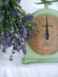 vintage green scale and Lavender