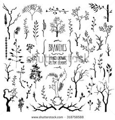 Hand drawn collection of rustic and floral design elements. Tree branches, flowers, plants and leaves ink silhouettes. Isolated vector on white.