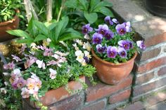 久しぶりにカメラを持って庭へ。。。 : 小さな手作りガーデン
