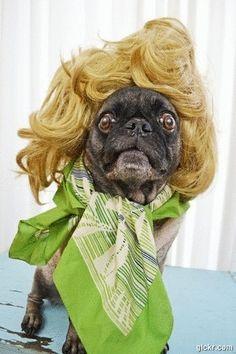 Drag Queen Pug