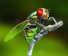 LightWave 3D Artist: Christian O'Riley - Fly