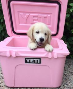 Pup in a yeti cooler, does it get cuter? ;)