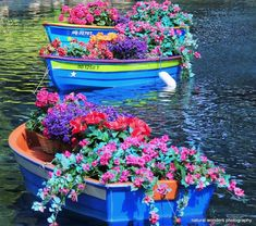 Decorate Your Lake Front Home - Floating Planters! I Love this!