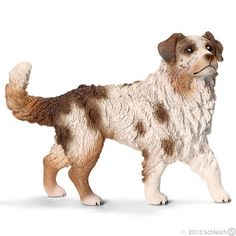 The Australian Shepherd will guard your sheep by day and keep your feet warm by night.