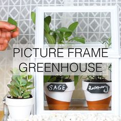 Picture Frame Greenhouse #DIY #gardening #plants #home