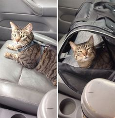 Took Porkchop To The Vet Today. This Was The Before And After Pics. This Was The Look I Got The Entire Ride Home