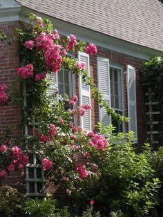 Climbing roses in Day's Ferry, Maine | The Finest Kind
