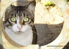 Tips & Advice: A guide to Vaccinating cats