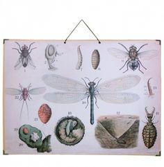 Reproduksjon av ekte vintage skolaplakater. Med genuine detaljer som hjørner med metallbesyttelse og bakside av brun kratig papp. Mål: 55x74 cm