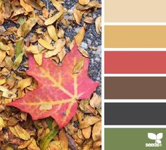 fallen hues by design seeds. Most of you know by now that that I love to add mustard yellow to my fall designs. I know, I know - right now you are making a face. Trust me. Colour Pallette, Colour Schemes, Color Combos, Color Patterns, Design Seeds, Montage Photo, Color Me Beautiful, Color Balance, Color Stories