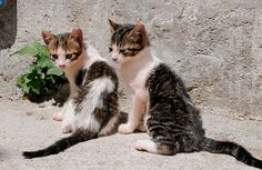 magical-meow:   	Two kittens by Floris van Halm    	Via Flickr: 	Medina Tetouan, Morocco