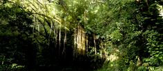 Rain forest on the Tantalus trial - Honolulu, Hawaii
