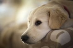 Urinary Incontinence in Pets