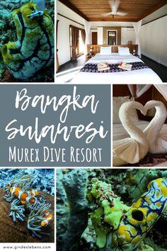 Murex Dive Resort Bangka - Tauchresort im Norden von Sulawesi Jimbaran Bali, Bangka, Dive Resort, Koh Tao, Ubud, Chiang Mai, Thailand Travel, Phuket, Trekking