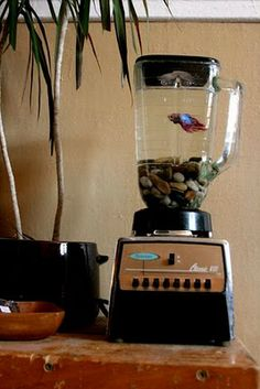 Upcycled Kitchen Blender Made Into A Fish Tank Aquarium